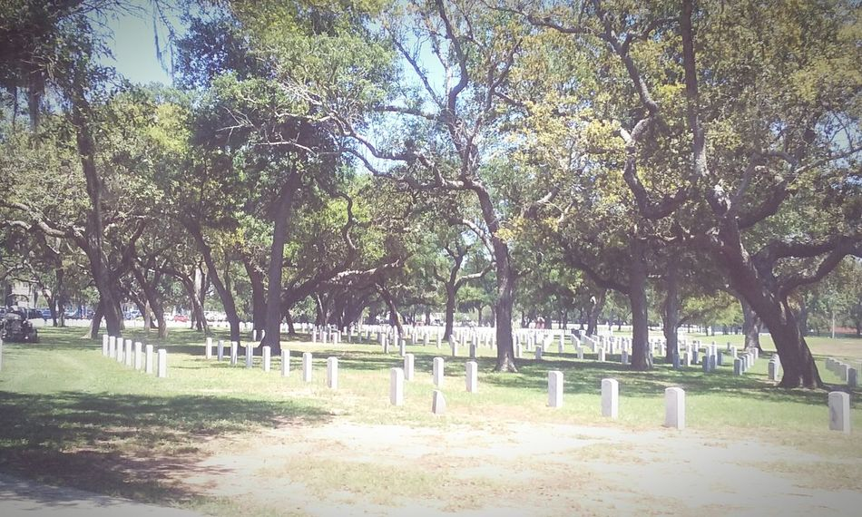 A Field of Honor. Sorrow and Respect. White Headstones In A Row Thank You Soldiers.