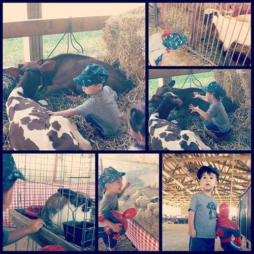 A boy and the Lakecountyfair . Cowsofinstagram Sheepofinstagram Barns watchoutforthepoo🐂🐑🐓🐷🚜🎡