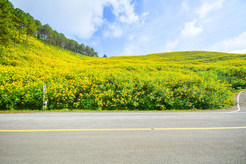 Scenic view of yellow road by trees against sky