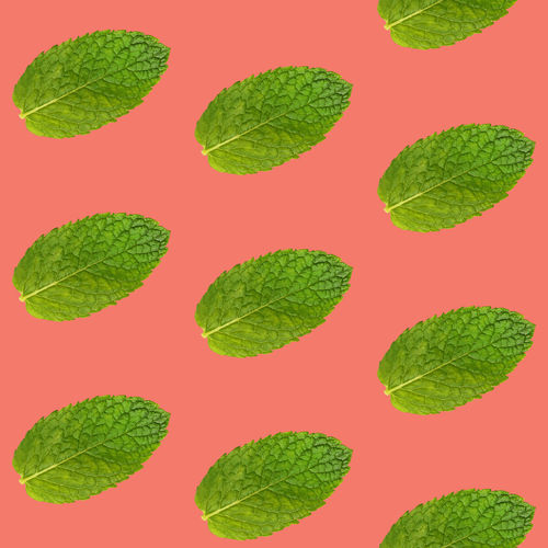 Pattern of fresh green mint leaves over coral pink background Group Of Objects Green Color Leaf No People Food And Drink Pattern Colored Background Plant Part Studio Shot Food Freshness Close-up Backgrounds Cut Out Still Life Mint Leaf - Culinary Mint Pink Background Living Coral Repetition In A Row Order Seamless Pattern Seamless Leaf Vein Trendy Modern Minimalism Pastel Colored