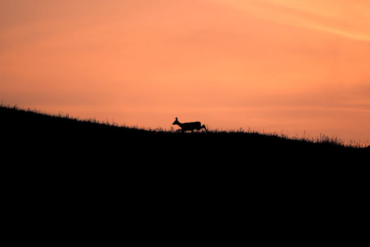 A deer rushing through the sunrise scenery of Alpe di Siusi, Italy. Deer Sunset Silhouettes Animal Silhouette Beauty In Nature Field Idyllic Nature Nature Silhouette No People Non-urban Scene Orange Color Scenics - Nature Silhouette Sky Sunset Tranquil Scene Tranquility