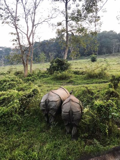 Tree Nature No People Day Animal Themes Animals In The Wild Outdoors Landscape Green Color Mammal Grass Beauty In Nature Rhinoceros Safari Animals Sky