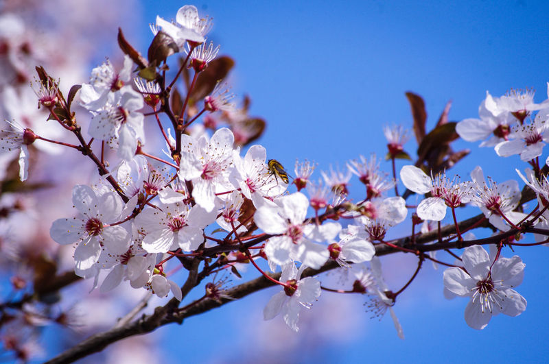 EyeEm Best Shots EyeEm Nature Lover EyeEmBestPics EyeEm Best Shots - Nature Beauty In Nature Wonders Of Nature Flower Head Tree Flower Branch Springtime Clear Sky Pink Color Blossom Botany Petal Fruit Tree