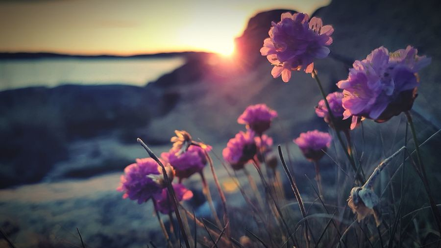Summertime SummerNights Goodlife Vacation Time EyeEm Selects Flower Head Flower Sunset Mountain Pink Color Water Lake Blossom Sky Wildflower