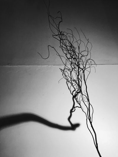 Abstract of light Tree Branch Nature Plant No People Bare Tree Sky Wall - Building Feature Dead Plant Dry Growth Natural Pattern Plant Part Silhouette Close-up