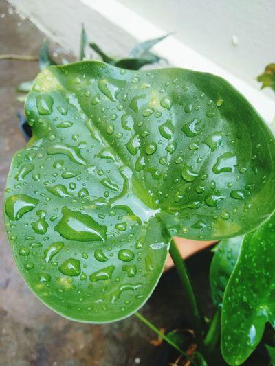 Nature Plantas Green Plants