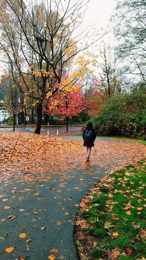 Girl With Backpack Girl Walking On Path. Girl Alone Fallen Leaves On The Ground Autumn Leaves Autumn Colors, Walking On Pathway Tree Full Length Autumn Leaf Walking Sky Grass Pathway Leaves Fall Walkway Maple Maple Leaf Treelined