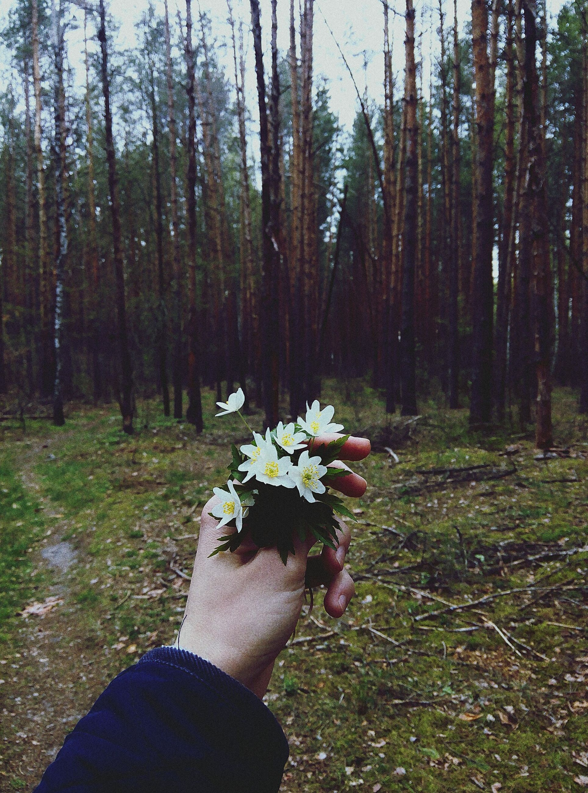 human hand, real people, one person, human body part, tree, flower, nature, lifestyles, day, beauty in nature, growth, leisure activity, women, forest, men, outdoors, adults only, only men, human leg, adult, people, low section