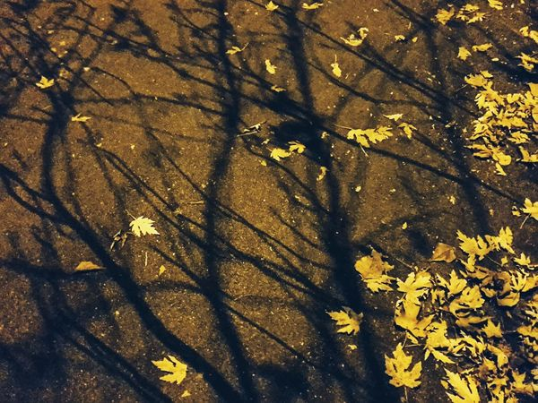 Gold on the blacktop | Night Shadows Leafs Nature On Your Doorstep Looking Down Walking Around The City  Winter Walking Around Getting Inspired Castelfranco Veneto Showcase: December EyeEm Italy |