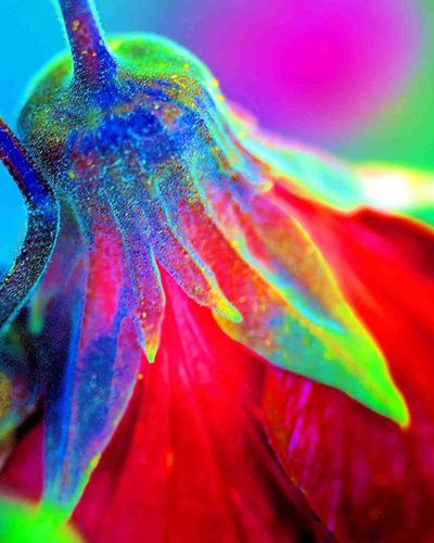 The texture fascinates me =) 1) Macroclique 2) Ig_affair_weekly 3) Myworld_in_green 4) Small_world_upclose 5) 5star_images 6) Edit_mania__ 7) Sn_apr3 8) Mta_macro 9) Pic_groups 0) Pocket_macro 1) _flowersworld_ 2) Pocket_family 3) Igglobalclubmacro 4) Macro_captures 5) Fotofanatics_alltags_ 6) Ponyfony_flowers 7) Myworld_in_green 8) 9vaga_flowerscolor9 9) Tv_flowers 0) Quintaflower 1) Bpa_macro 2) Naturehippys 3) Nature_sultans 4) Tv_colors 5) rainbow_petals 6) ig_azhubs 7) macro_brilliance 8) 9vaga_macro9 9) fotocatchers 0) resourcemag