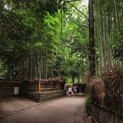 Tree Growth Real People Nature Green Color Day Outdoors Men Beauty In Nature Bamboo - Plant People