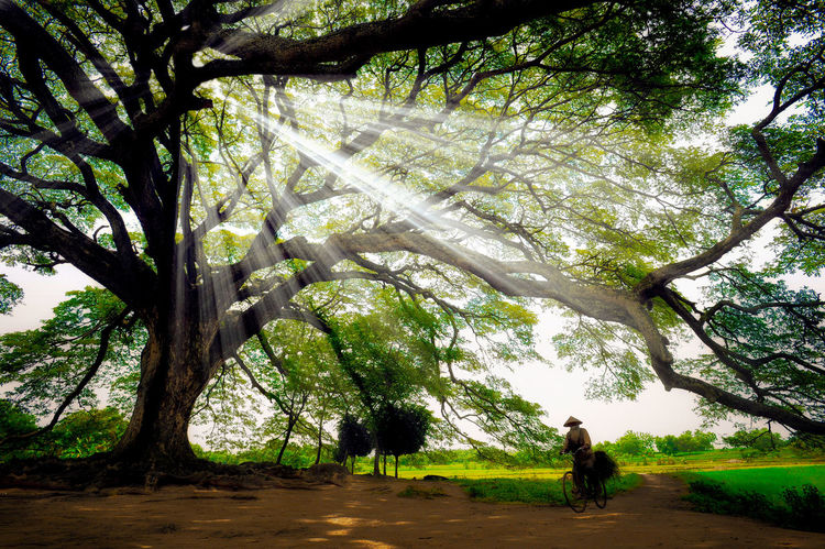 Ray of light Tree Day Nature Outdoors Growth Beauty In Nature Rural Scene People Sky