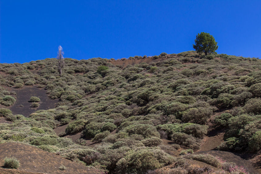 A trip on Gran Canaria Gran Canaria Gran Canary Island Hiking Nature Nature Photography Travel View Arid Climate Beauty In Nature Clear Sky Landscape Landscapes Tranquil Scene Travel Destinations View From Above Perspectives On Nature