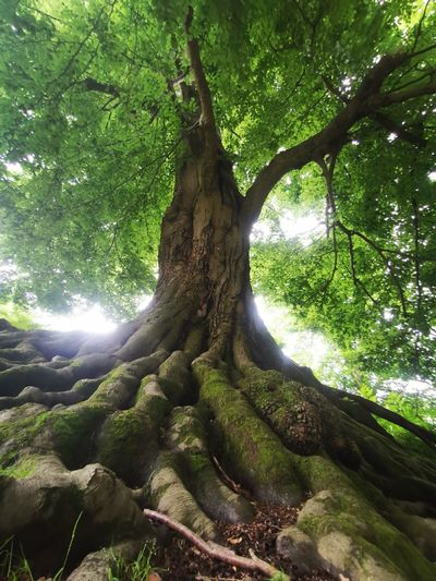 Low angle view of sunlight streaming through tree in forest