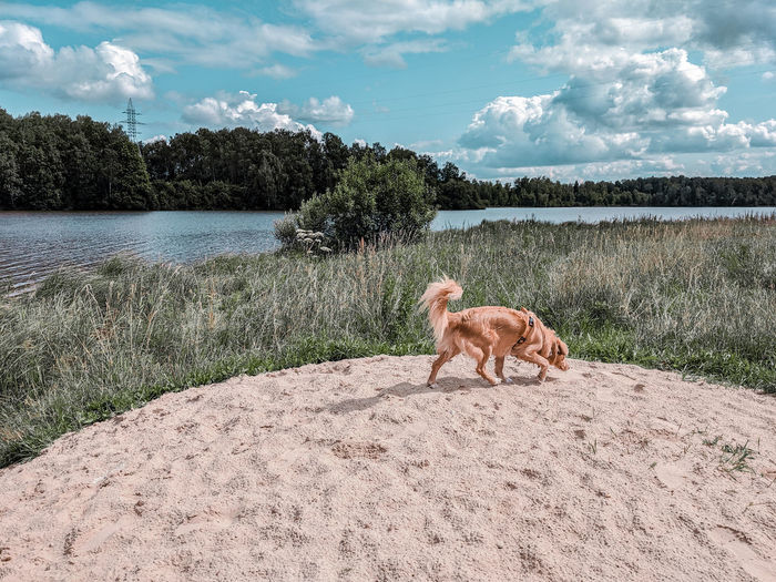 View of a dog by a lake looking away