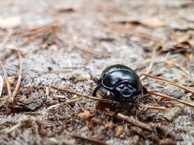 Forest Beetle Forest Photography He Looks Like A Buddha EyeEm Selects Insect Close-up