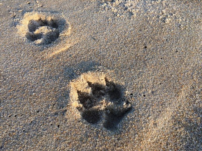 High Angle View Sunlight Pattern Sand Beach Textured  Day No People Outdoors Paw Print Close-up Rhode Island Beachphotography Beach Photography Adventure Dogs