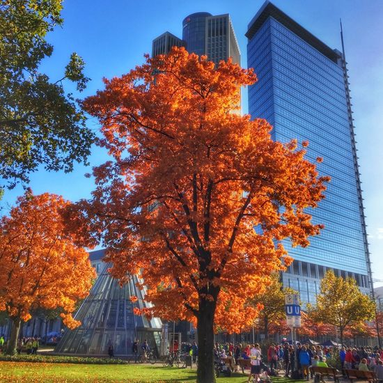 Fall in the City in Frankfurt am Main, Germany Tree Architecture Autumn Built Structure Building Exterior Change City Orange Color Tall - High Skyscraper Low Angle View Outdoors Fall