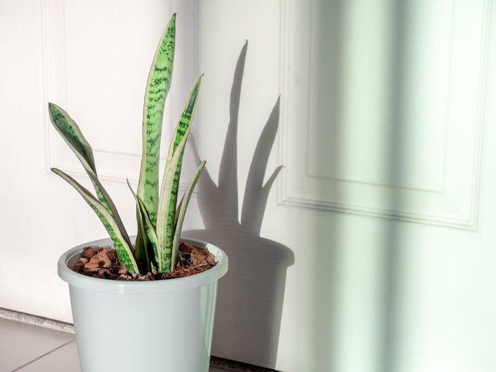 Close-up of potted plant against wall at home