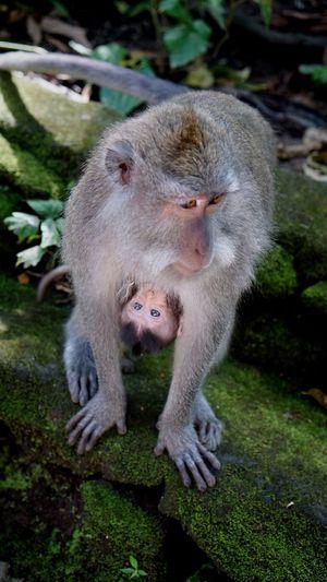 Close-up of monkey on grass