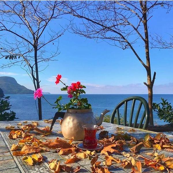 Flower Water Sea Tree Beach Clear Sky Blue Red Table Sky