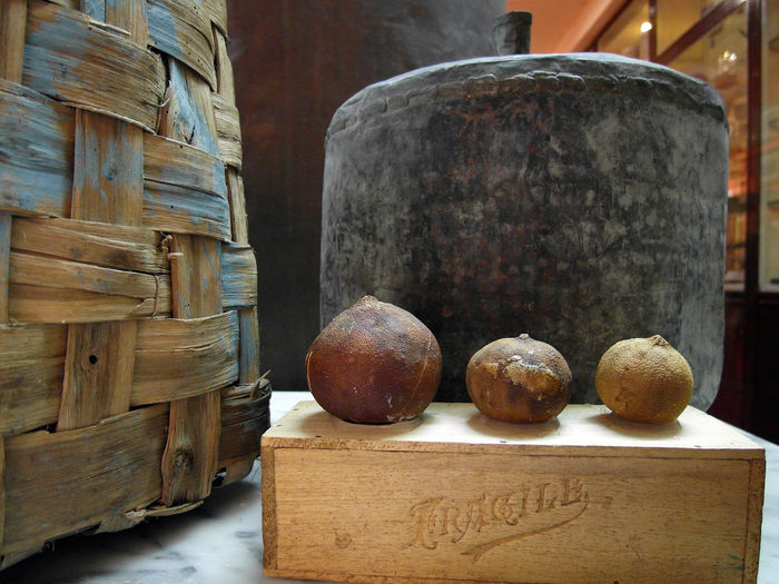 Bergamots at Bergamot Museum Bergamot Museum South Italy Bergamota Bergamotte Calabria Calabriadascoprire Close-up Food Food And Drink Fruits Italy❤️ Museums