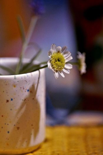 Close-up of white flower on table