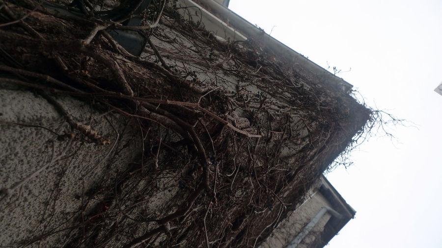 tree wall Day