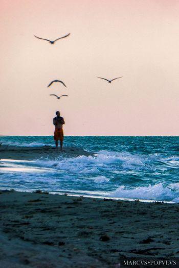 Título: Pensamientos lejanos/Far thougts Autor: Marcus Populus Lugar: Miami Beach, Florida, USA Cámara: Panasonic DMC TZ60 Punto F: f/6 Tiempo de exposición: 1/200s Velocidad ISO: 100 Distancia focal: 90mm Flying Horizon Horizon Over Water Nature Real People Scenics - Nature Sea Silhouette Sky Water