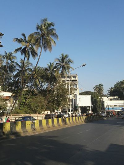 Another clear morning. Backgrounds Street Road Street Photography Tree Palm Tree City Outdoors Clear Sky Day No People Cars Focus On Shadow Man-made Structure Architecture Mid Adult Men Beauty In Nature Sun Nature Relax Clear Sky Sky Sunlight Blue Trees Adapted To The City