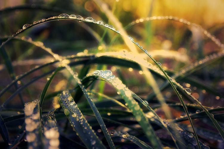 Утро Spider Web