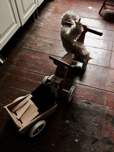 Monkey Toy On Tricycle At Hardwood Floor