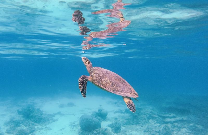 High angle view of tortoise swimming in sea