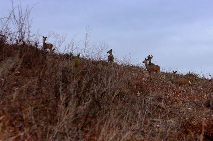 Rehe Animals In The Wild Animal Wildlife Tierfotografie Tierwelt Tier Reh Wildlife Wald Feld Wiese  Natur Himmel Landscape Landschaft Sky Rehe Tiere