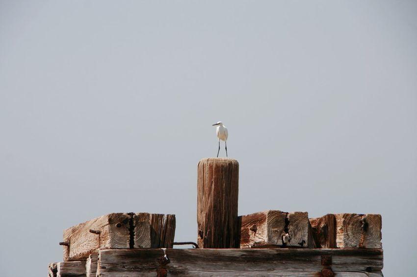 Sea And Sky Seaside Bird EyeEm Selects Bird Bird Of Prey Perching Sky Eagle - Bird Sea Bird Swimming Animal Water Bird White Swan