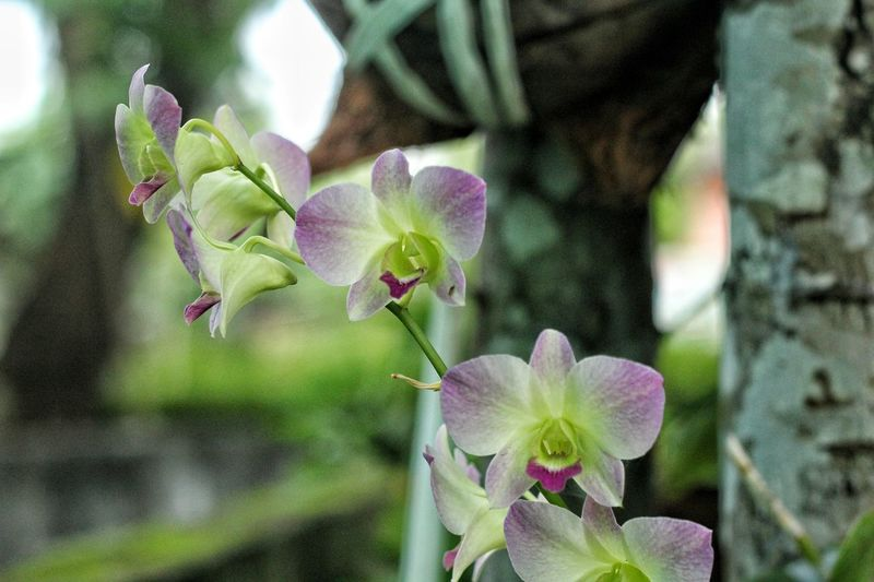 Flowers, Nature And Beauty Flowrrs And Plants Flower Photography Flower Collection Indonesia_allshots Indonesian Photographers Collection Indonesia_photography