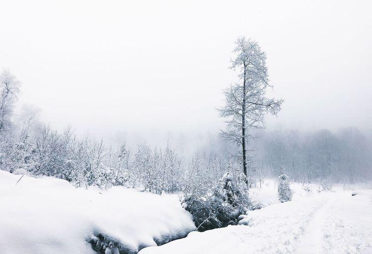 •white•