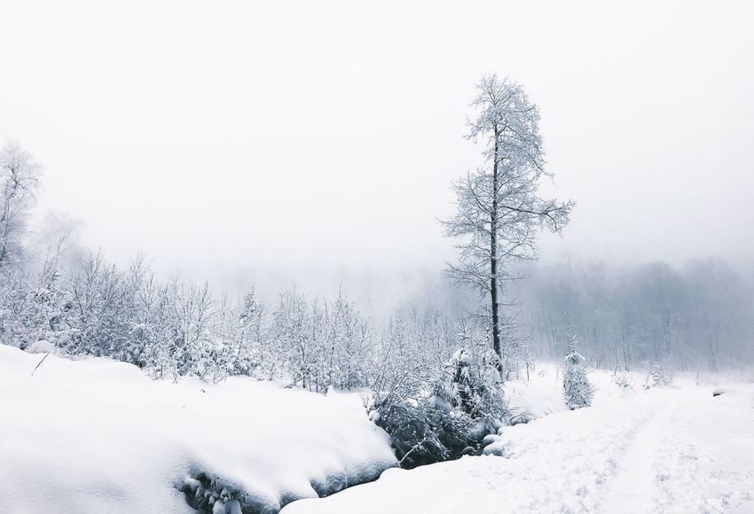 •white• Exceptional Photographs Tadaa Community Winter Snow Cold Temperature Weather Nature Beauty In Nature No People Tranquility White Color Tree Outdoors Landscape Scenics