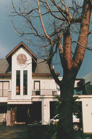 House Bungalow Popular Photos Trees Branches OpenEdit Monster