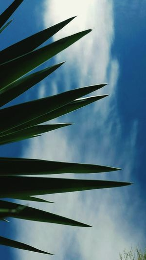 NATURE Nature Travel Sky Day Beauty In Nature Plant Low Angle View First Eyeem Photo