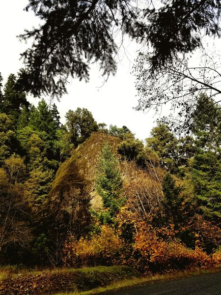I liked way the colors are on the rock. Tree Low Angle View Growth Outdoors Sky Nature