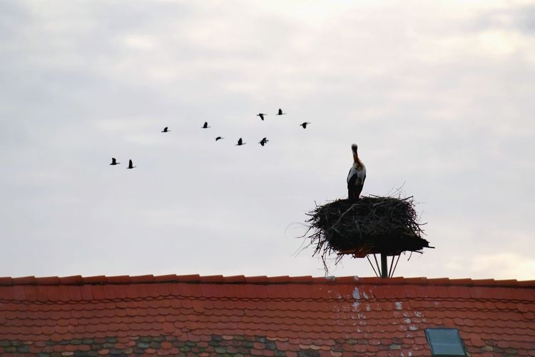 frozen world is over... storks are coming back Nature Photography Beauty In Nature Reinheimer Teich Cold Temperature Cold Condition Nature_collection My Point Of View Bird Flying Flock Of Birds Sky Animal Themes White Stork Stork Animal Nest Bird Nest