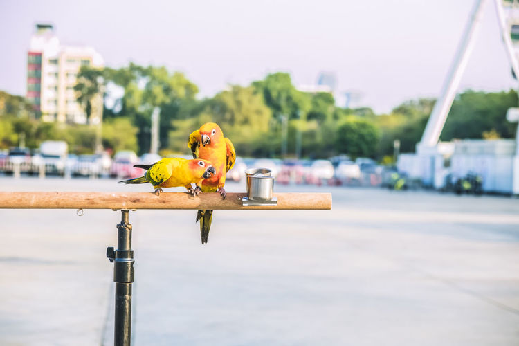 Close-up of bird perching on a boat