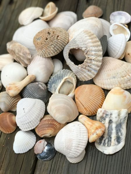 EyeEm Selects Seashells Large Group Of Objects Close-up Seaside Seashell Seashell Collection Seashell Art Seashell No People Down By The Sea Sea Life Sea Seashell Beach Summer Seashells Broken Shells Shell Photography