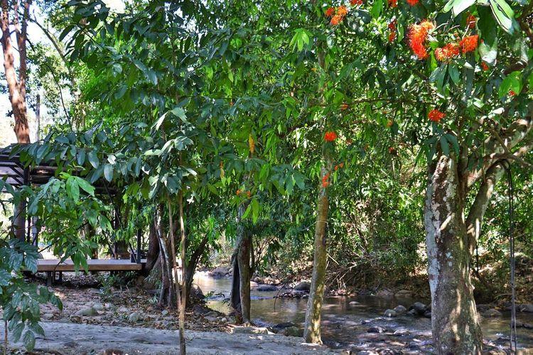 Trees growing in farm