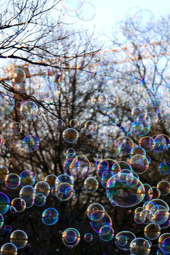 Low angle view of bubbles against trees