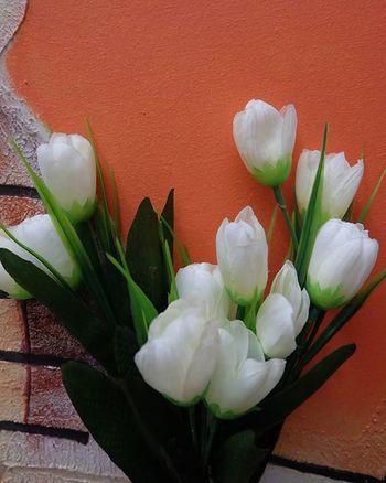 white, salah satu warna fav 😊 Pocket_family Rsa_ladies Snapshots_daily White Fujifeed Pics_at_home Lovers_home4 Gofujifilm Fujifilm_id Tv_living_nm2