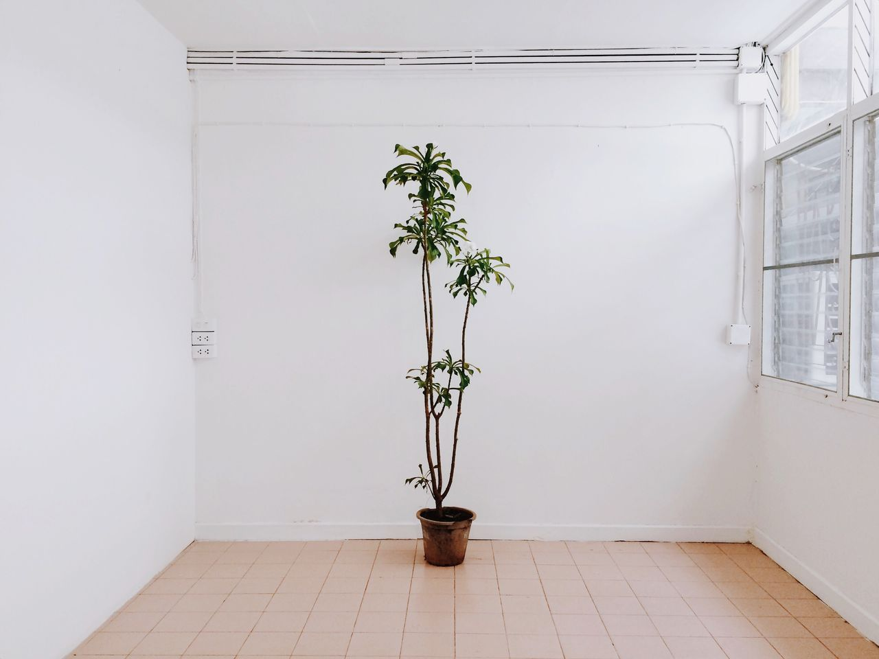 Potted Plant Against White Wall In Room At Home