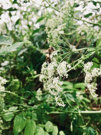 Bee Invertebrate Animal Animal Themes Animals In The Wild One Animal Insect Plant Green Color Focus On Foreground No People Growth Animal Wildlife Close-up Nature Spider Web Beauty In Nature Fragility Day Arachnid