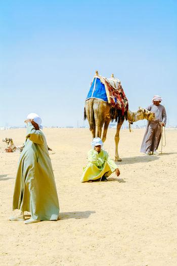 Bedouins with camels in desert Sahara. Giza. Egypt. Africa Beduines Camel Desert Desert Life Egypt Giza Giza, Caïro, Egypt Pyramid Pyramids At Giza Safari Sand Tourism
